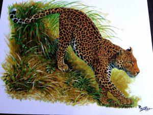 Panthera pardus delacouri - Foto von Postkarte